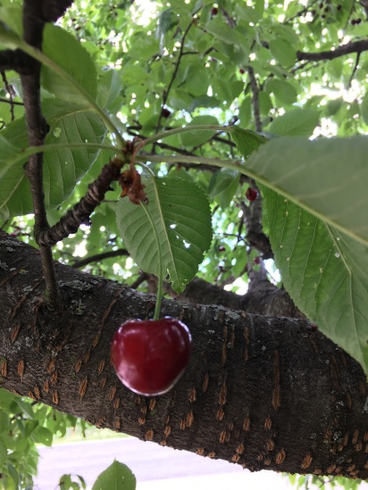 A cherry is a pice of art