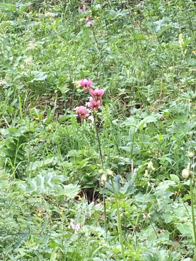 Wild Orquídea!